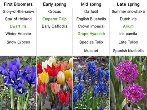 bulb garden layout design planning your spring bulb garden the lazy gardener
