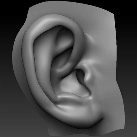zbrush tutorial ear perfect ear 3d model