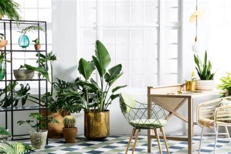 inspirasi jenis tanaman hias rumah