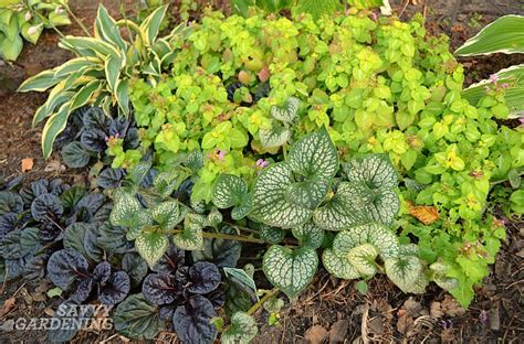 colourful foliage plants perennial plants and shrubs for year interest