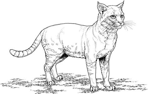 Coloring Pages Of Realistic Cats | realistic cat coloring pages bestofcoloring com