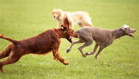 casas rurales en cantabria que admiten perros casas rurales cantabria con perros casas rurales en
