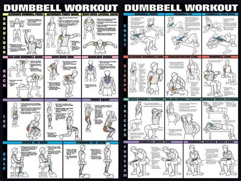 full body dumbbell workout no bench dumbbell exercises not a very large jpg fitness