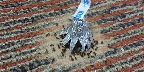 was tun gegen mücken im garten was hilft gegen ameisen im garten was hilft gegen ameisen