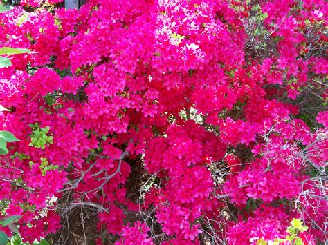 beautiful spring flowers blooming in georgia by