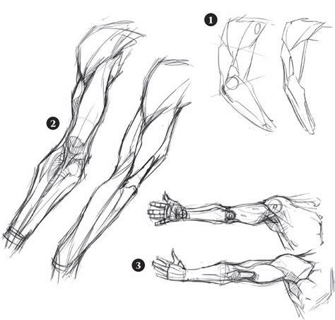 figura corpo umano organi interni 17 migliori idee su corpo maschile su torso