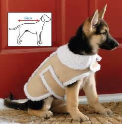 5 Best Dog Winter Coat Your Dog Will Enjoy This Winter Tool Box