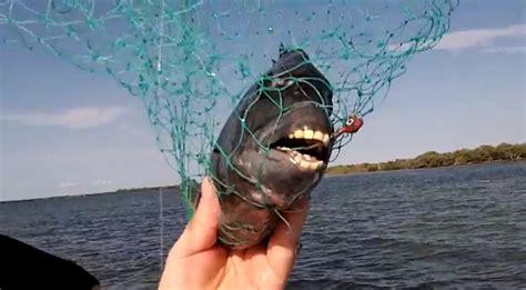 pesce testa di il pesce con i denti umani giornalettismo