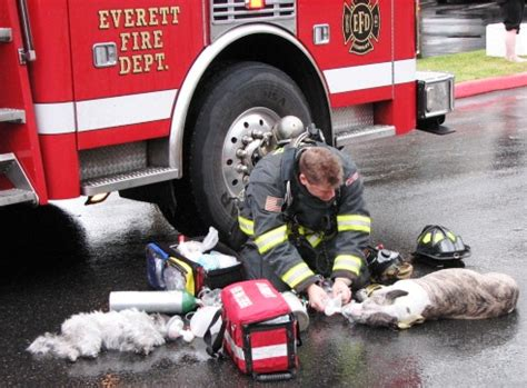 firemen with puppies favorite photo of the day as everett firefighter revives 2 dogs with oxygen