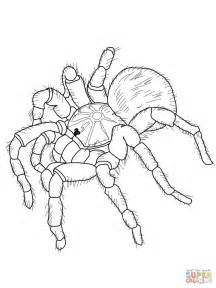 Displaying 16&gt Images For  Tarantula Drawing sketch template