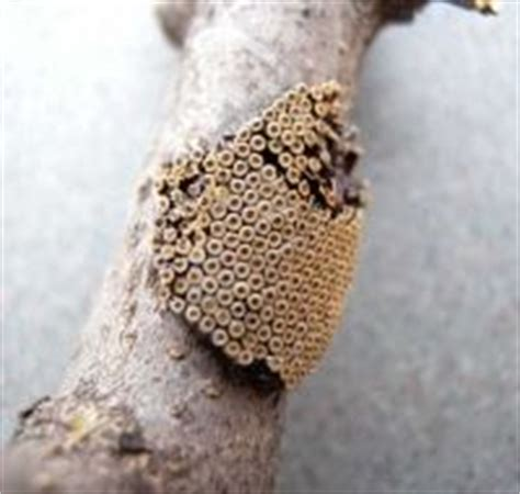 tattoo infection snopes 1000 images about trypophobia on pinterest phobias