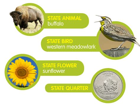 state flower kansas flowers ideas for review