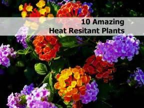 heat resistant plants 10 amazing heat resistant plants