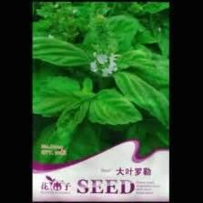 1 Pack Biji Tanaman Basil Kemanggi Merah Maica Leaf 20 S Seede jual bibit tanaman herba bibitbunga