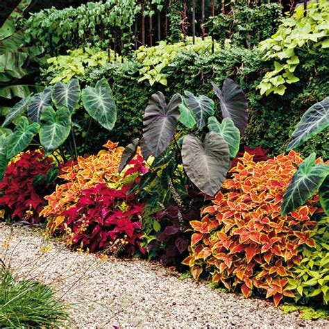 17 best images about tropical flower beds on pinterest south america san diego and tropical