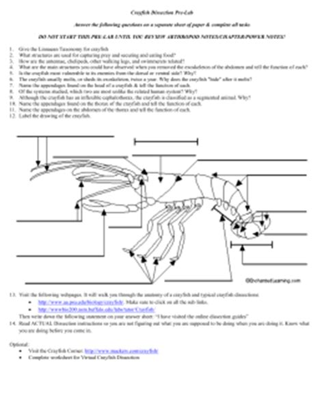 Grasshopper Dissection Worksheet Answers by Studylib Net Essys Homework Help Flashcards Research