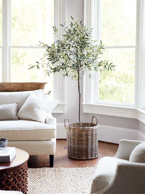 Ballards Design the plant of 2017 indoor olive tree thou swell
