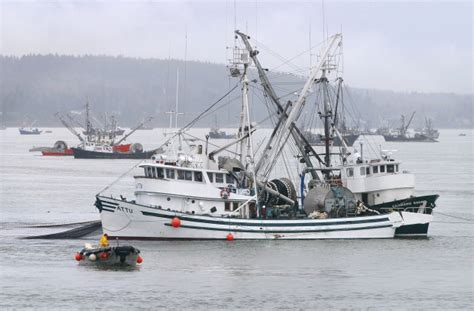commercial fishing boats for sale british columbia herring harvest continues to be controversial on b c coast