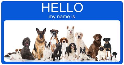 best names for dogs top 100 most popular and names dogtime