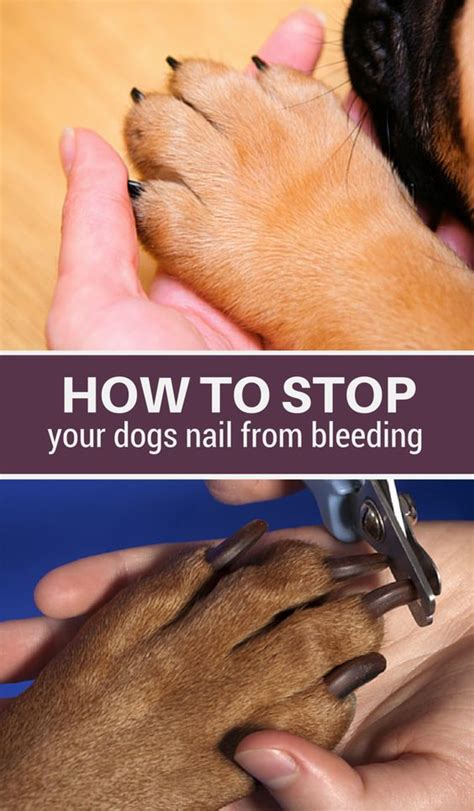 stop nail from bleeding the o jays your and pets on