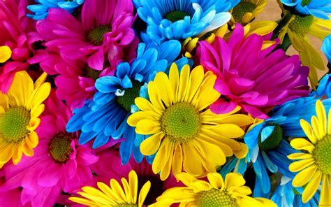 colored flowers multi colored flowers wallpaper www pixshark