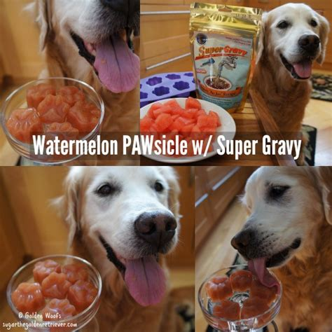 gravy for dogs quench your s thirst watermelon pawsicles w gravy golden woofs