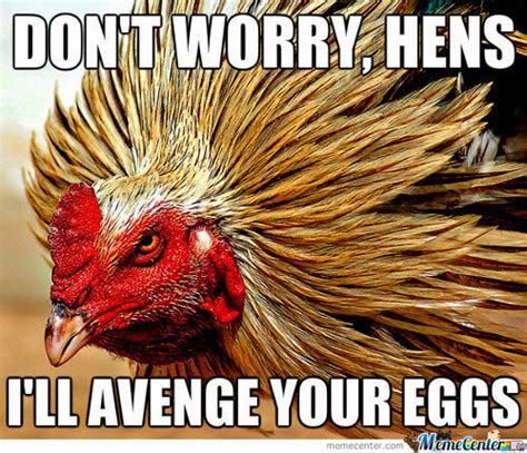 rooster meme rooster memes best collection of rooster pictures
