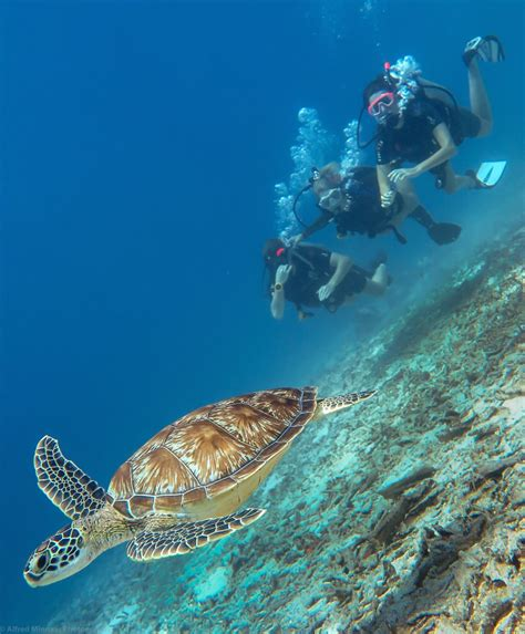 dive gili air diving in gili air
