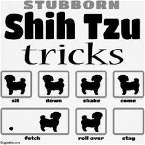 shih tzu stubborn 1000 images about doggies shih tzu on shih tzu hair and bows