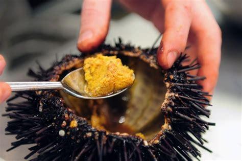 cucinare ricci di mare come si cucinano i ricci di mare