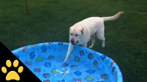 well mannered well mannered knows it s not cool to in a pool just s best friend for