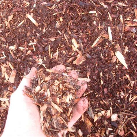 hemlock mulch it has a red color and is the second most common mulch used in landscape but