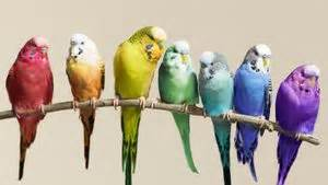 how long does a parakeet live reference com