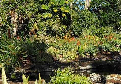 Botanical Gardens Kauai The Moir Gardens A Spectacular Botanical Park In Poipu Kauai Only In Hawaii