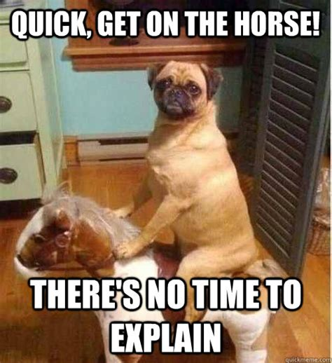 Meme Quick - quick get on the horse there s no time to explain pug