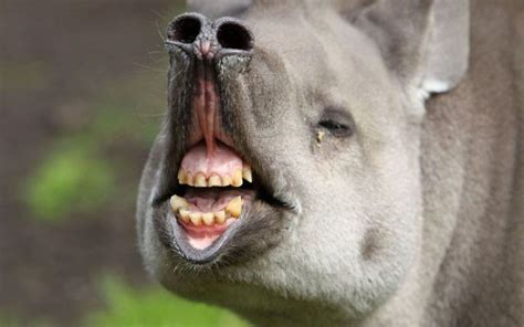 Most Hilarious Animals by Animals 171 World