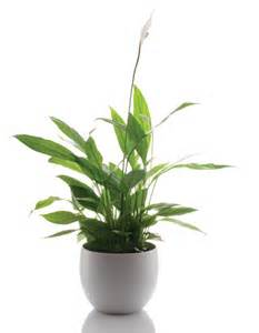 Ondoor Plants by Names Of Indoor Plants Related Keywords Amp Suggestions