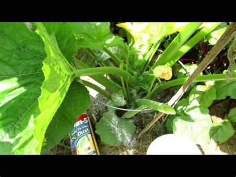 does sevin dust kill bed bugs trg 2012 how to kill snails and slugs in your vegetable