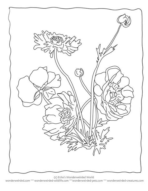botany coloring book free botany coloring pages murderthestout