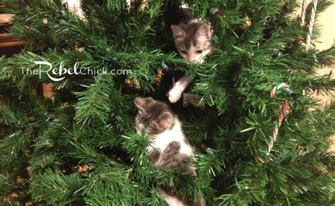 kittens in christmas tree the rebel chick
