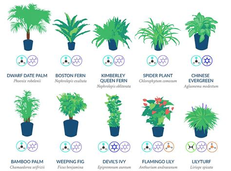 nasa reveals  list    air cleaning plants