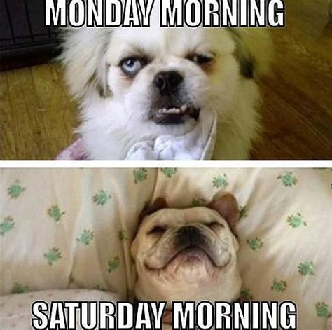 Funny Saturday Memes - 10 funny saturday memes that capture real feelings of the