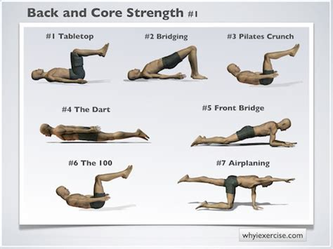 back strengthening exercises illustrated with lifelike