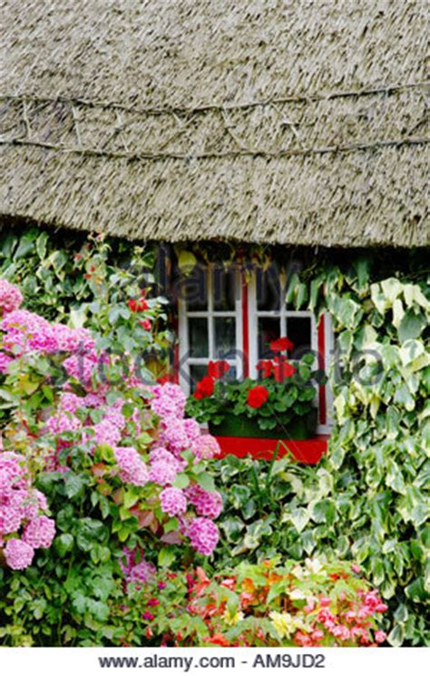 Traditional Cottage Garden Flowers Thatched Roof Cottage Adare County Limerick Ireland Stock Photo Royalty Free Image 27831580