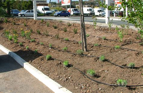Arrosage Des Tomates Dans Le Sud by Jardinier Paysagiste Fabrice Jardin 224 Ollioules Cr 233 Ation