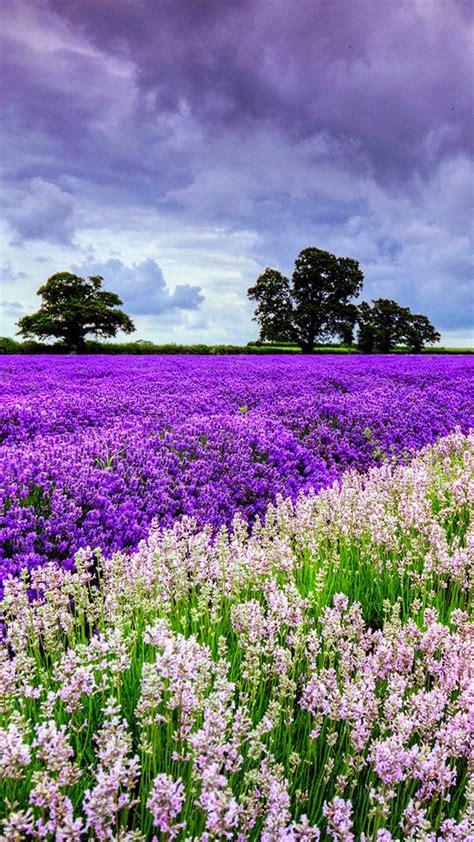 sfondi iphone fiori sfondi iphone fiori 82 immagini