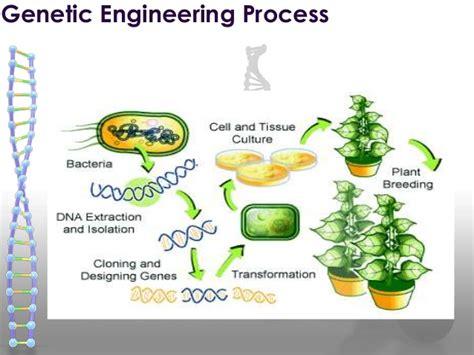 Genetic Engineering pin genetic engineering on