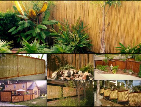 backyard scapes bamboo fencing tropical san diego by backyard x