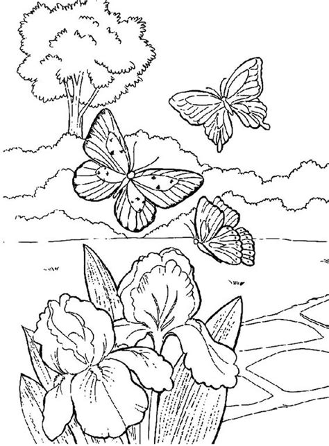 coloring pages butterfly garden beautiful butterfly in the garden coloring pages