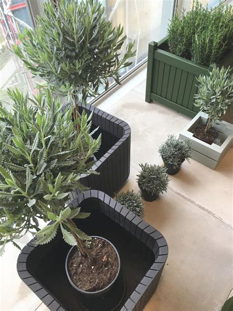 B And Q Garden Planters by How To Transform Your Garden On A Budget